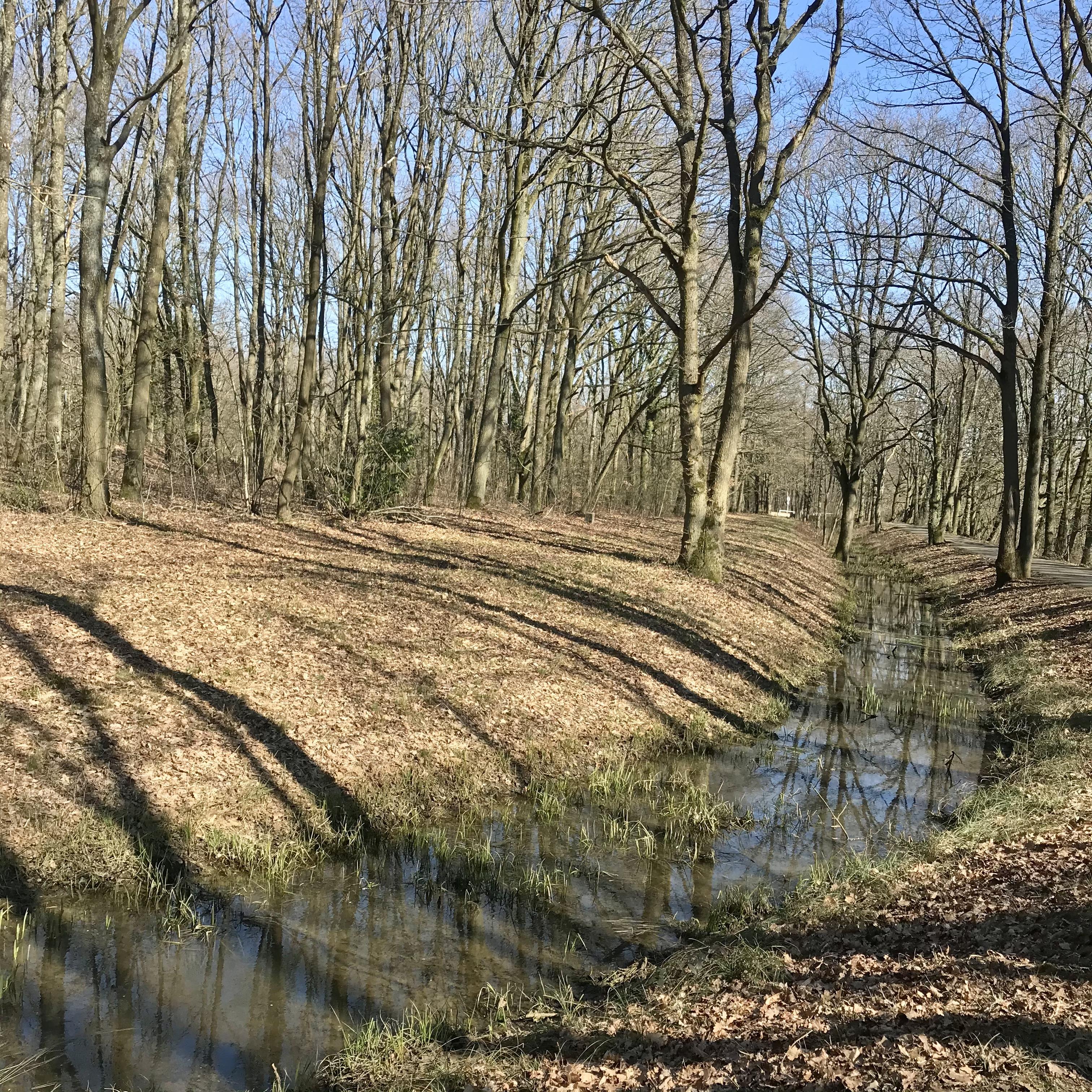 Rigole de Favreuse, Bois brûlé, à la lisière du Plateau de Saclay. Vianney Delourme pour Enlarge your Paris
