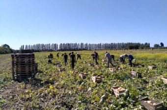 Les fermiers bio toujours plus nombreux en Île-de-France