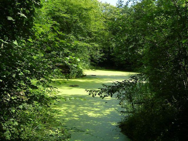 Le parc forestier de la Poudrerie à Sevran / © Marianna (Wikimedia commons)