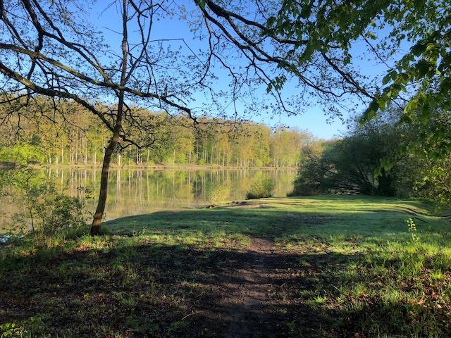 L'étang d'or en forêt de Rambouillet autour duquel sont dissimulées plusieurs géocaches / © Steve Stillman pour Enlarge your Paris
