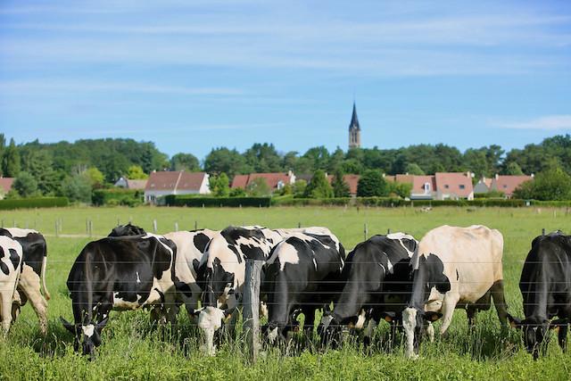 Le village de la Boissière-Ecole dans le Parc naturel de la Haute Vallée de Chevreuse dans les Yvelines / © Nicolas DUPREY - CD 78