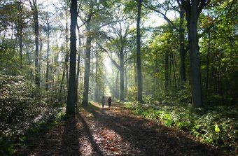 Balade sur une butte forestière en forêt de Montmorency