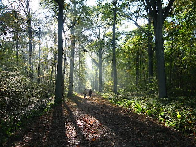 La forêt de Montmorency dans le Val-d'Oise et ses 2000 ha / © Pierre Metivier (Flickr - Creative commons)