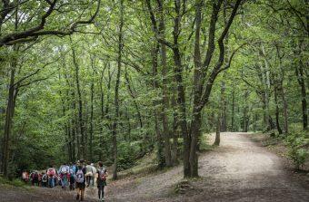 «La protection de la forêt passe par sa compréhension»