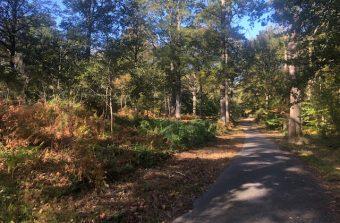 À vélo sur les pistes cyclables de la forêt de Rambouillet, la forêt aussi grande que Paris