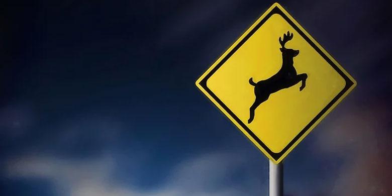 cảnh báo và để ý động vật khi lái xe