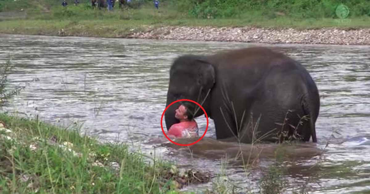Baby Elephant Rushes To The River To Save Her Human Friend