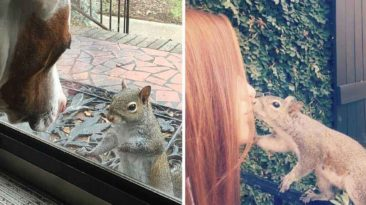family squirrel
