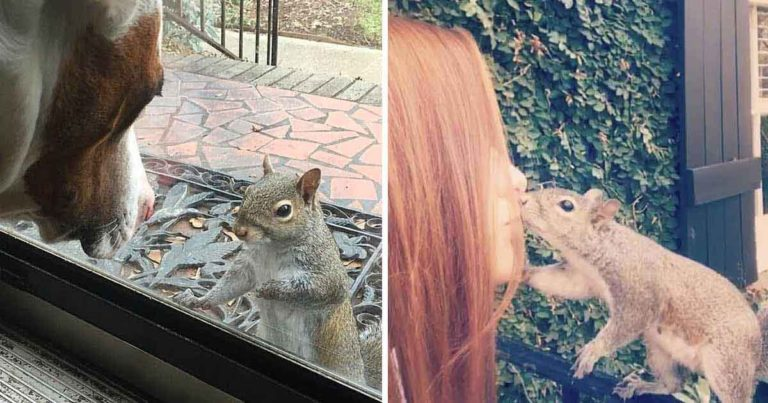 family squirrel