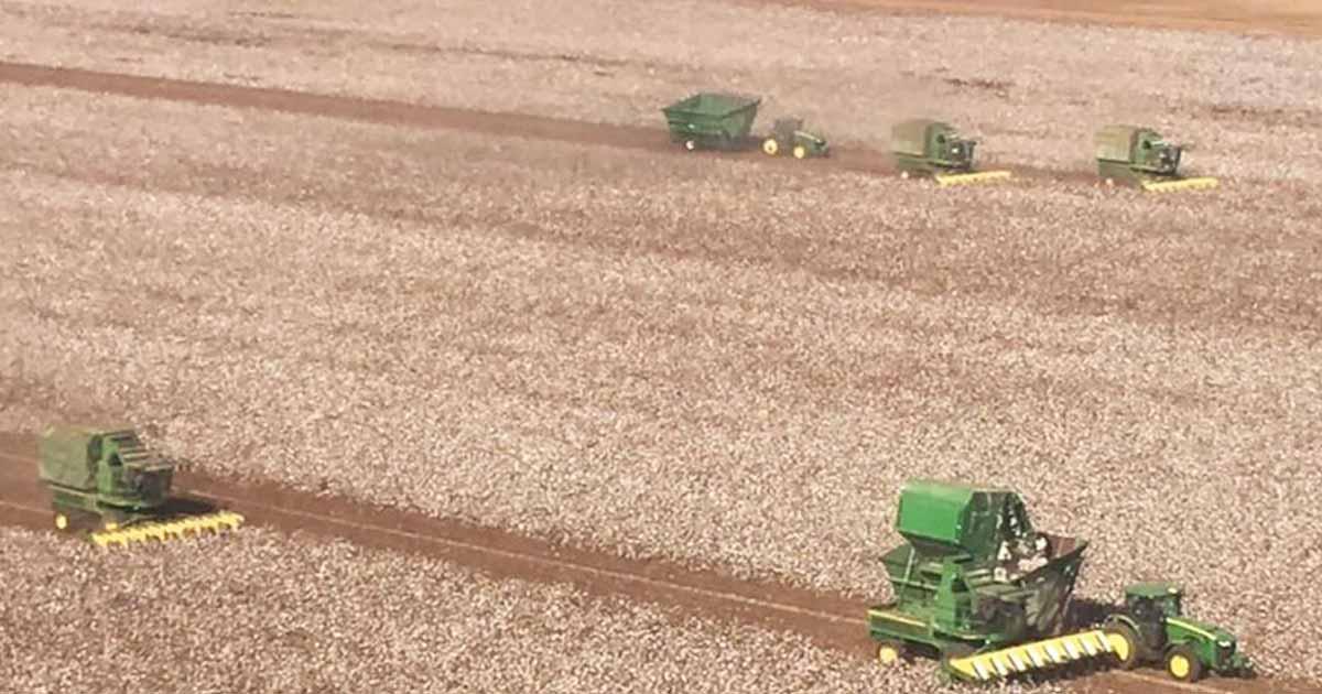 farmers harvest neighbors field