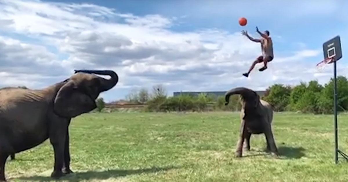 basket-ball-with-elephants