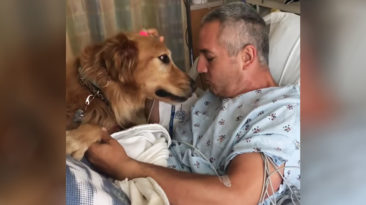 dog-meets-owner-at-hospital