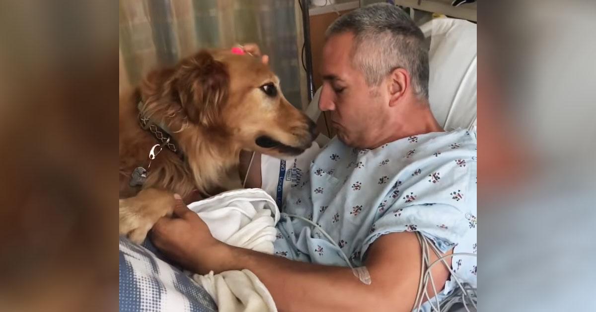 dog-meets-owner-at-hospital