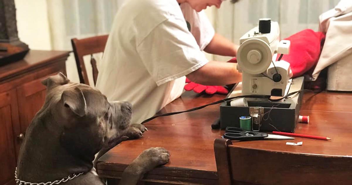 dog-waits-stitch-toy