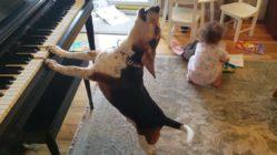 Dog Plays Piano
