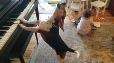 Dog Plays Piano