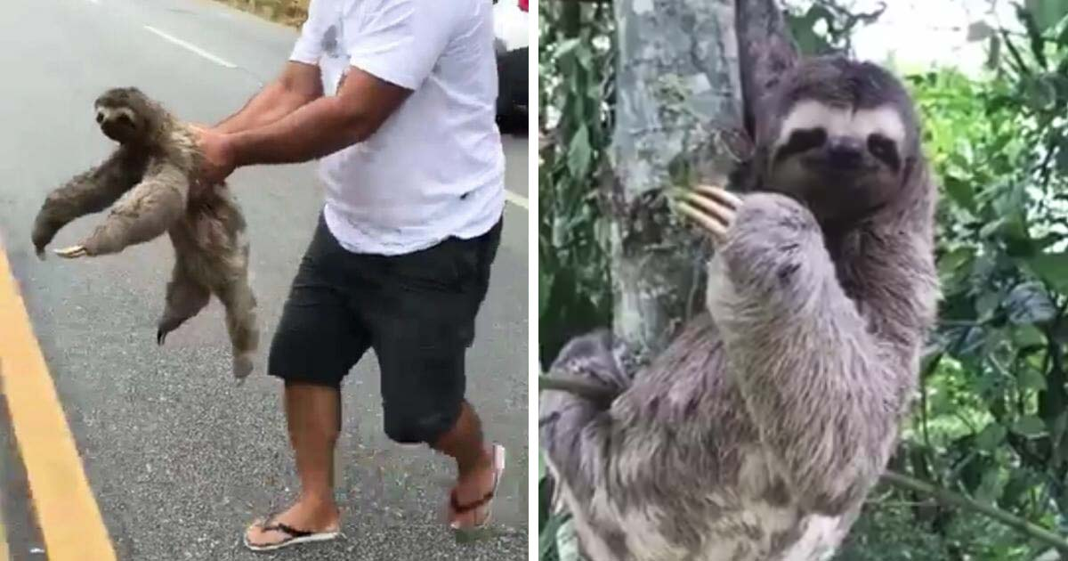 sloth-waves-at-rescuer