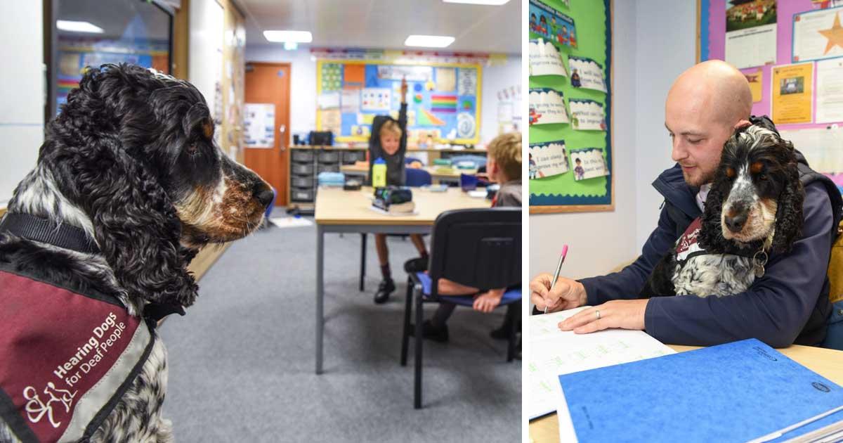 deaf-teacher-takes-class-with-dog