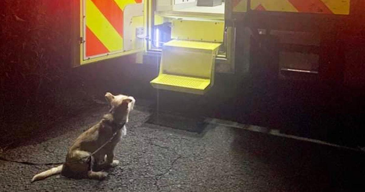 dog-leads-ambulance-owner