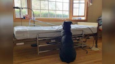 dog-waits-at-owner-bed-side