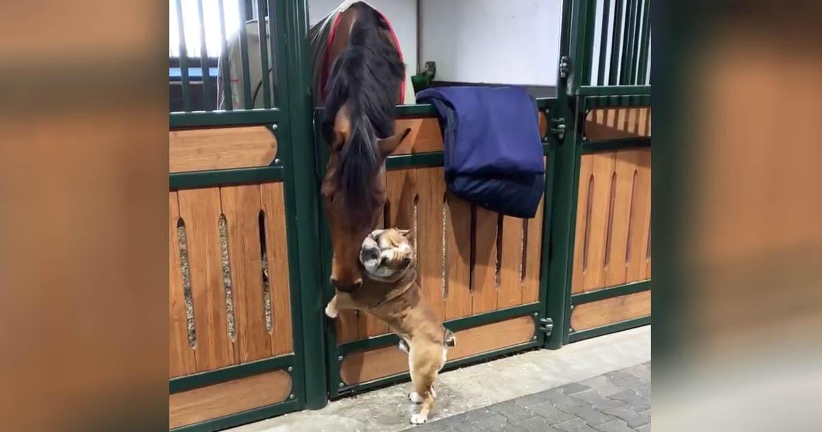 horse-dog-friendship