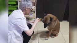 injured-dog-visit-pharmacy