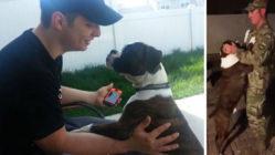military-dad-surprises-dog