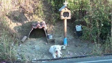 akita-waits-for-owner-at-train-station