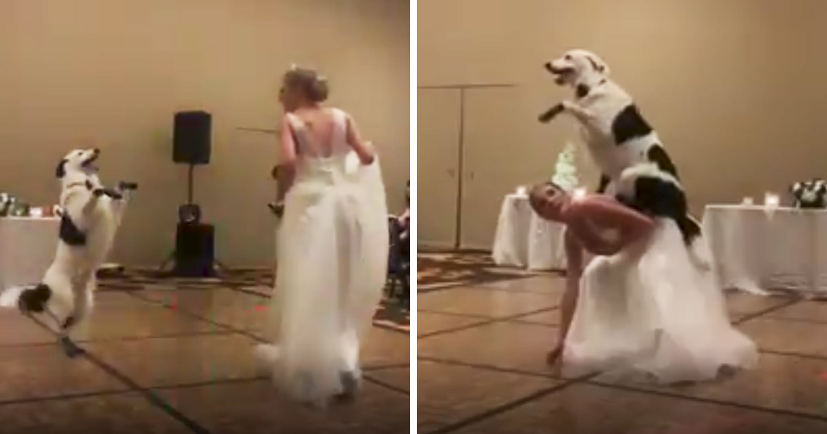 bride-dog-wedding-dance