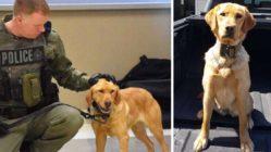 zoe-police-dog-finds-missing-girls