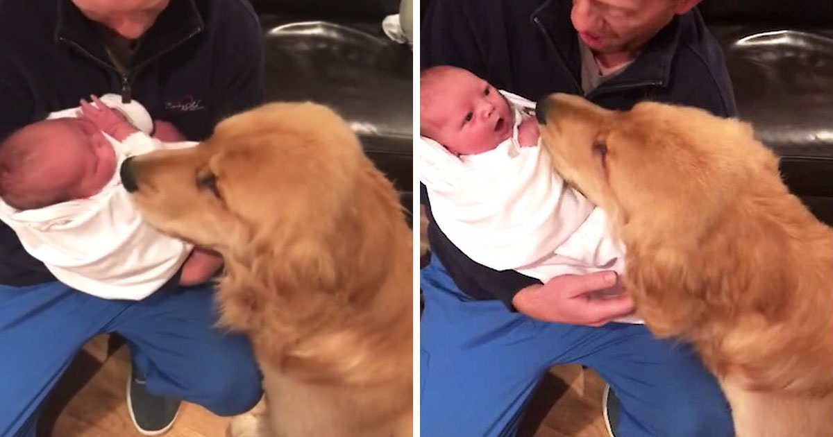 dog-meets-baby-first-time
