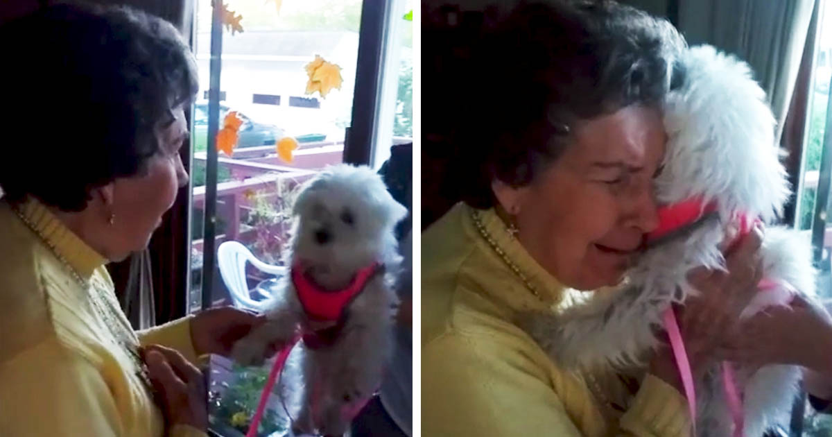 elderly-woman-puppy-surprise