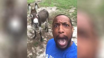 man-donkey-duet