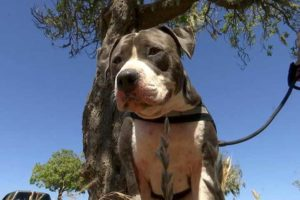 dog-saves-owner-shark-attack-3