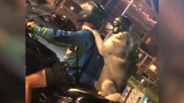 dog-bike-ride