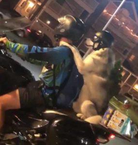 dog-bike-ride-2