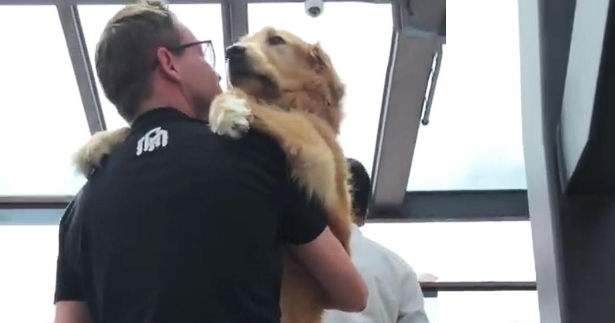 owner-carries-golden-retriever-escalator-main