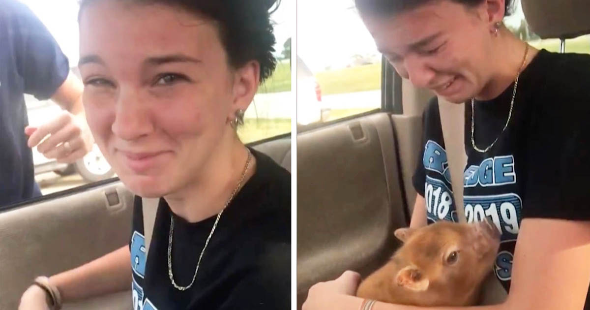 pig-surprise