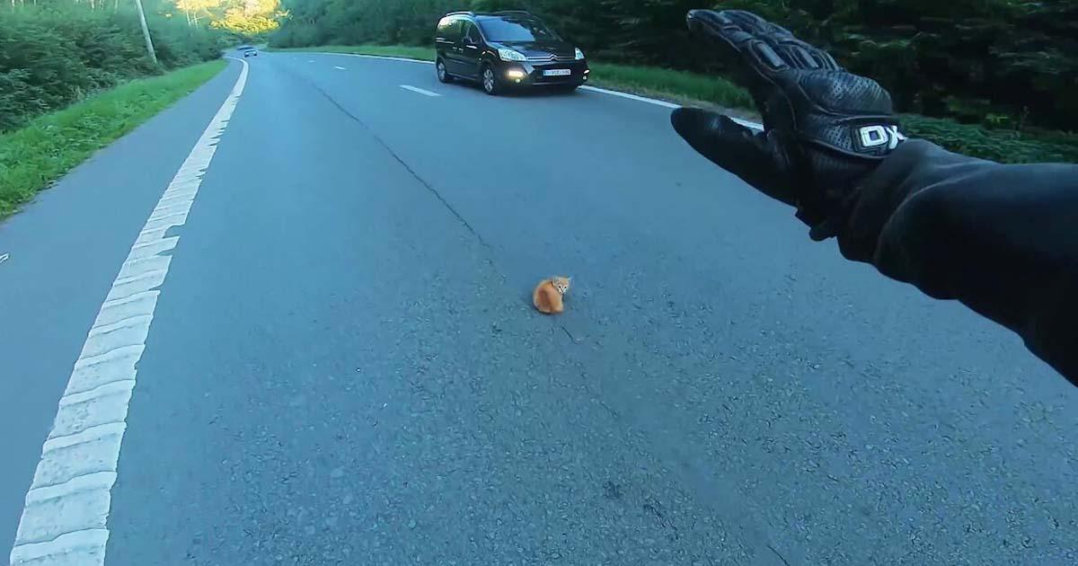 biker-save-kitten