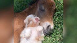 horse-puppy-snuggles-main