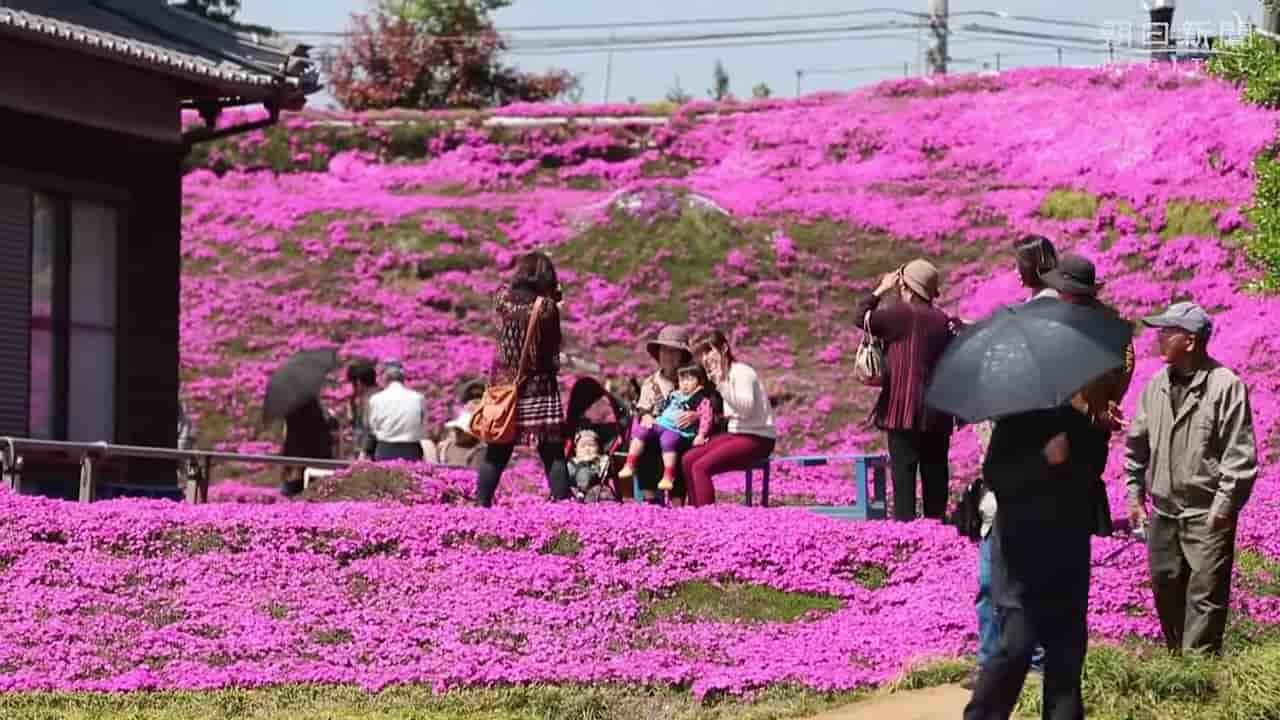 Japanese-husband-makes-garden-for-blind-wife