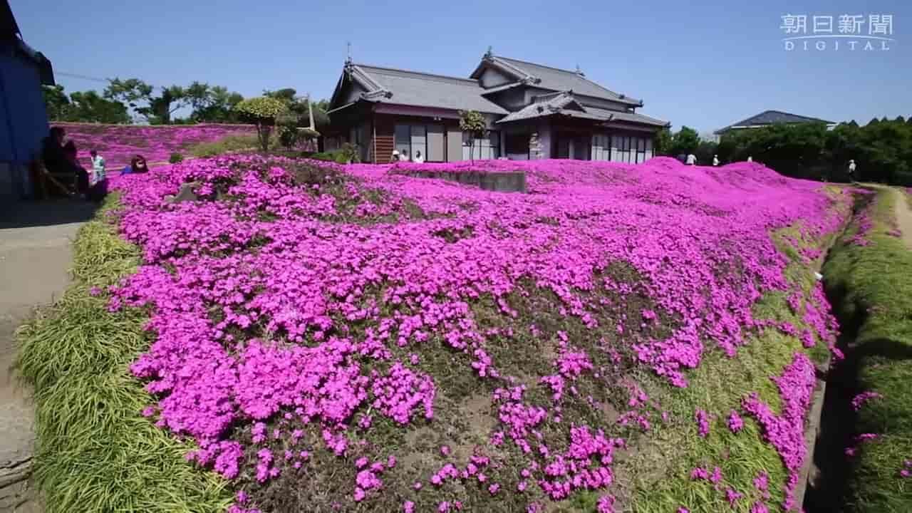 Japanese-husband-makes-garden-for-blind-wife-5