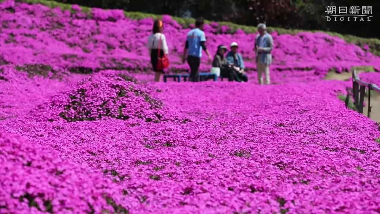 Japanese-husband-makes-garden-for-blind-wife-4