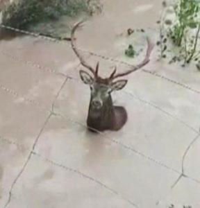 deer-rescue