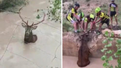 cyclists-rescues-deer-main
