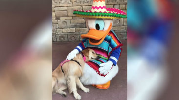 donald-duck-dog-cuddle
