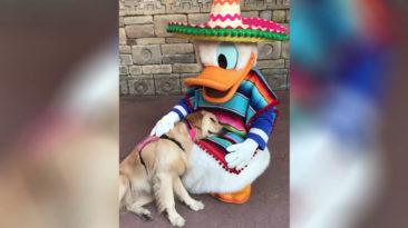 donald-duck-dog-cuddle