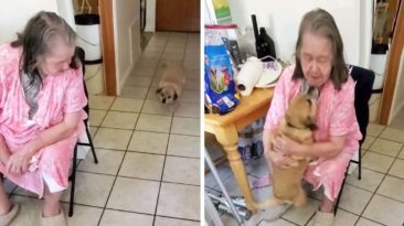 Dog reunites with grandma after hospital visit