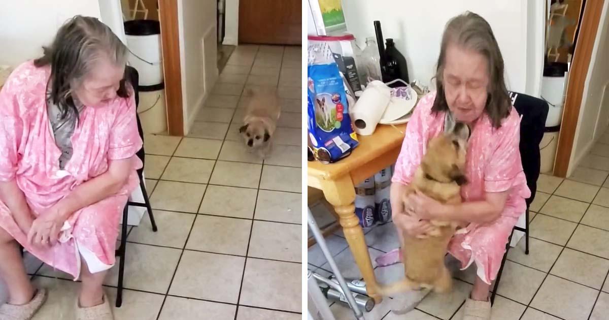 Dog reunites with grandma after hospital visit