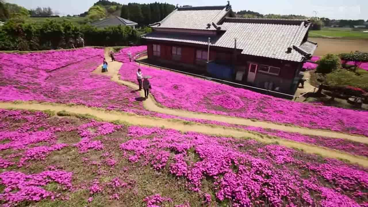 Japanese-husband-makes-garden-for-blind-wife-2